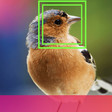 Using facial recognition technology on birds