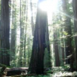 The Shamanic View of Mental Illness — JaysonGaddis.com