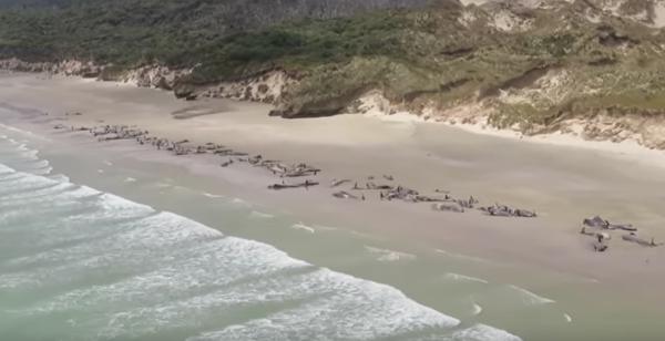 Forscher haben herausgefunden, warum Wale durch Sonar-Systeme sterben