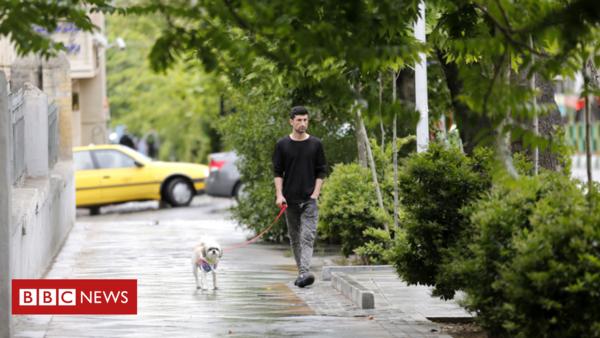 Teheran verbannt Hunde aus der Stadt – weil sich Menschen davon bedroht fühlen
