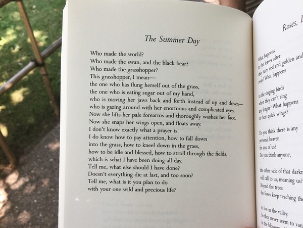 My favorite poem by Mary Oliver, which I had the fortune of reading on a summer day.