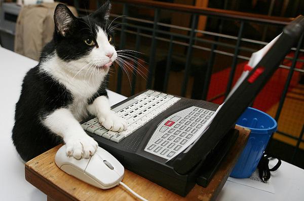 Als u de chef kattengifjes inhuurt ziet dat er ongeveer zo uit.