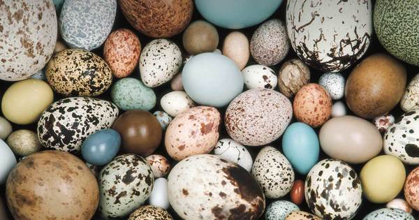Cracking the mystery of egg shape