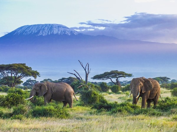 Intel relies on artificial intelligence to save elephants