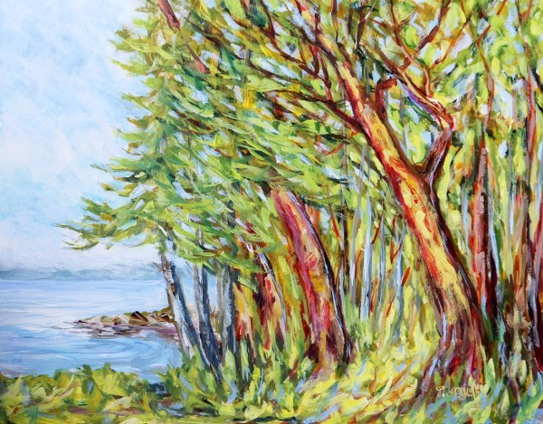 Arbutus Trees near Entrance to Active Pass by | Artwork Archive