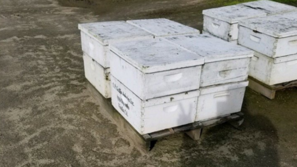 Reward offered to catch thieves stealing beehives from Central Valley orchards | KMPH