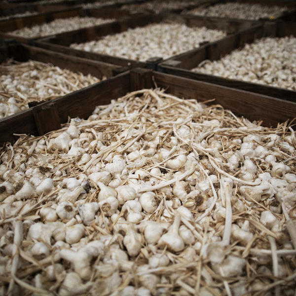 In Garlic Capital, Tariffs And Immigration Crackdown Have Mixed Impacts | Valley Public Radio