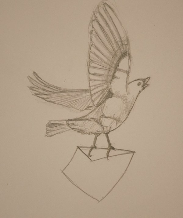 Next, Elle sketched the bird with pencil and paper instead. Notice the finer lines and greater range of hardness.