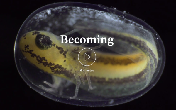 Look how one single cell becomes a complete organism in this six minute timelapse, amazing!