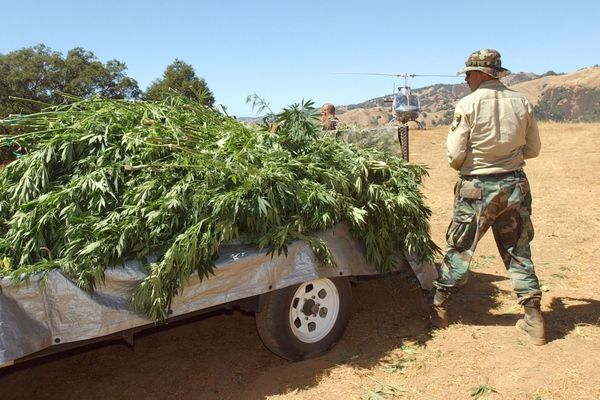 California's National Guard Targets Outlaw Pot Growers - Legal Growers Just Hope They Don't Miss