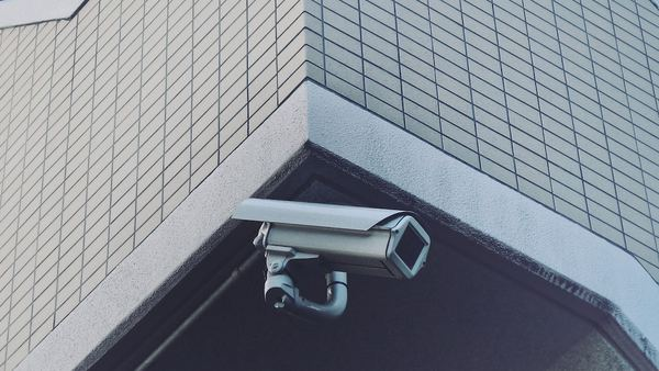 They are watching us - Credit:  Franck V. on Unsplash