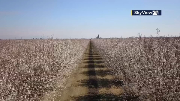 The 2019 Fresno County Blossom Trail is in full bloom! | abc30.com