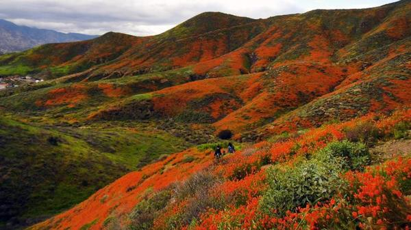 How to See the Super Bloom (Without Destroying It in the Process) | KCET