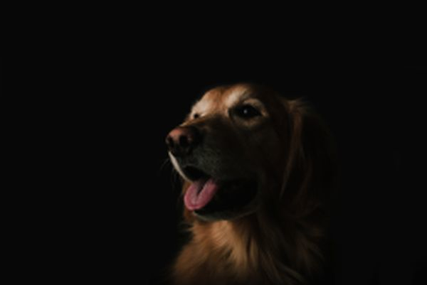 Dog door Brandon Day via Unsplash