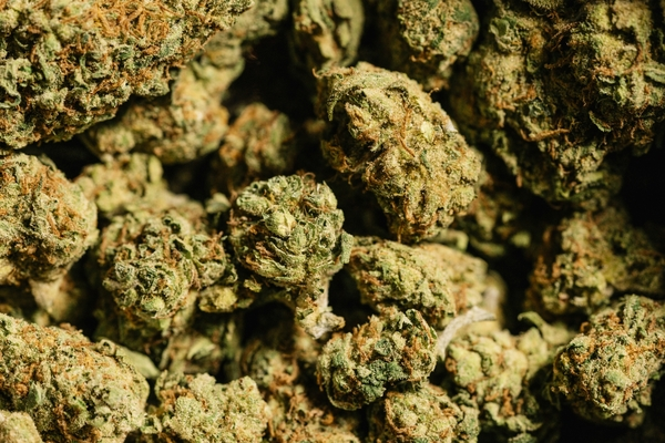 California Is Apparently Growing Way Too Much Weed