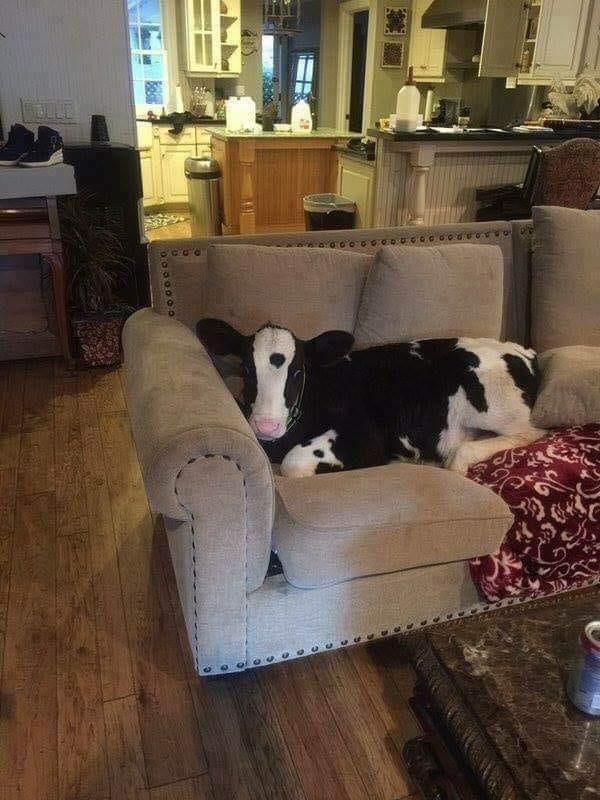 My dog is acting strange today - Credit: Reddit/u/MetalW0lf