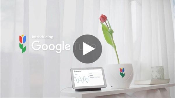 🇳🇱 Introducing Google Tulip 🌷
