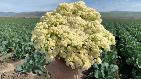 What's caulilini? New veggie from Salinas Valley coming to stores | abc7news.com