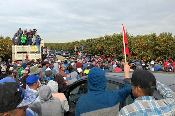 The Farmworkers Who Pick Your Halo Mandarins Just Organized a Massive Labor Strike | Civil Eats