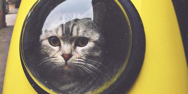 Building a cat image generator with Unsplash 😻