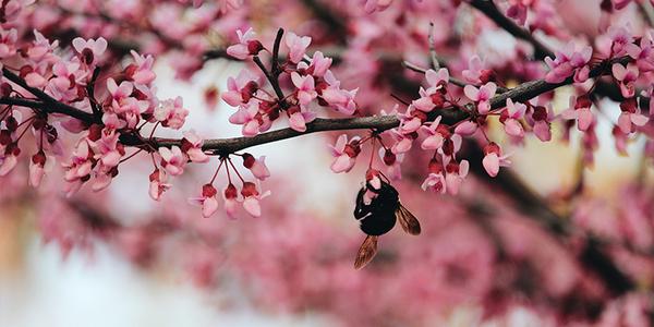 Bijen redden op kantoor - EventGoodies