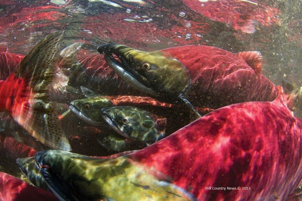 Earth Day Offers Bay Area a Chance to Improve Habitat for California's Most Endangered Salmon | Turtle Island Restoration Network