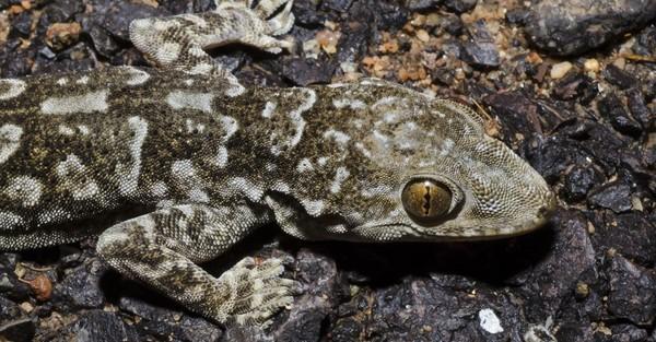 Wonach neu entdeckte Tierarten benannt werden
