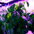 Machine learning is making pesto even more delicious