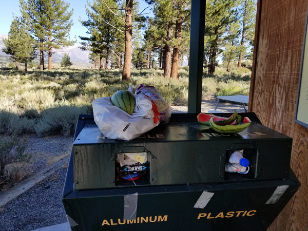 California Black Bears are Back in Action: Stash Food and Trash | CDFW News