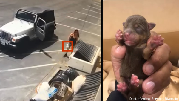 Video catches woman tossing 7 newborn puppies into Coachella dumpster in 90-degree weather | abc30.com