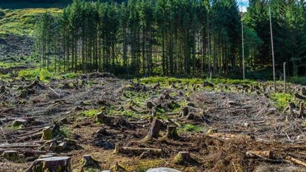 Timber production forests find place in Forest Act draft