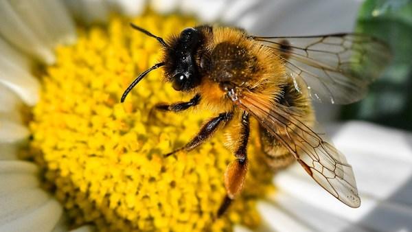 Häftlinge in Nordrhein-Westfalen betreuen mehrere Millionen Bienen