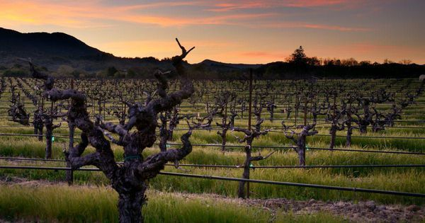 Tasting Wine From California's Oldest Vineyards