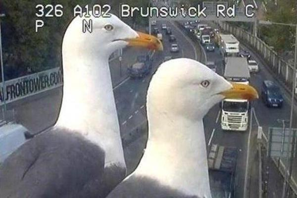 Watch: Seagulls fascinated by traffic camera in London