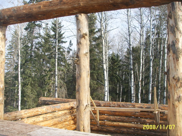 Alberta spruce and pine logs, with poplar in the background