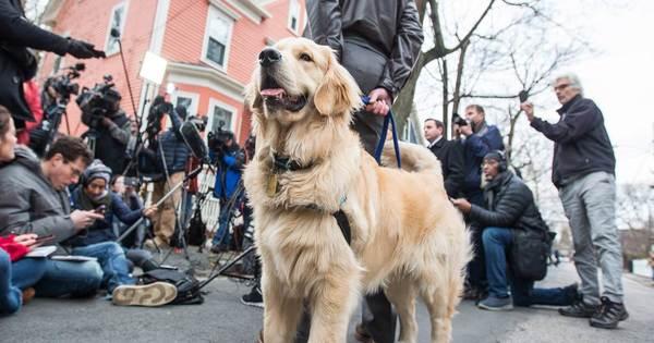"""Diese Hunde könnten der neue """"First Dog"""" werden"""