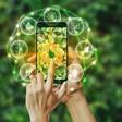 Ecologie digitale : 9 règles de bonne conduite à suivre, Transformation digitale - Les Echos Executives