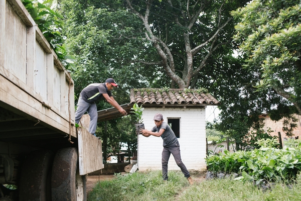 Coffee farmers unload a truck filled with coffee plants at Finca San Isidro in San Isidro, El Salvador. Credit: Alicia Vera/The World