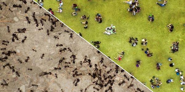 Die soziale Eigenschaft, die Menschen und Ameisen verbindet