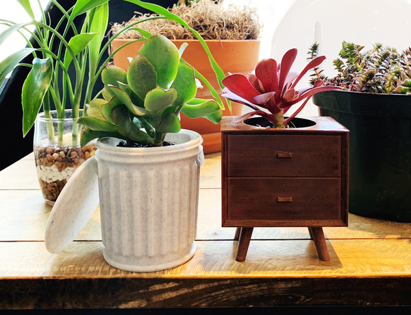 I picked these two cute 3D planters up at my local plant swap meetup. It turns out the maker also has an Etsy shop! I've linked it through the photo above.