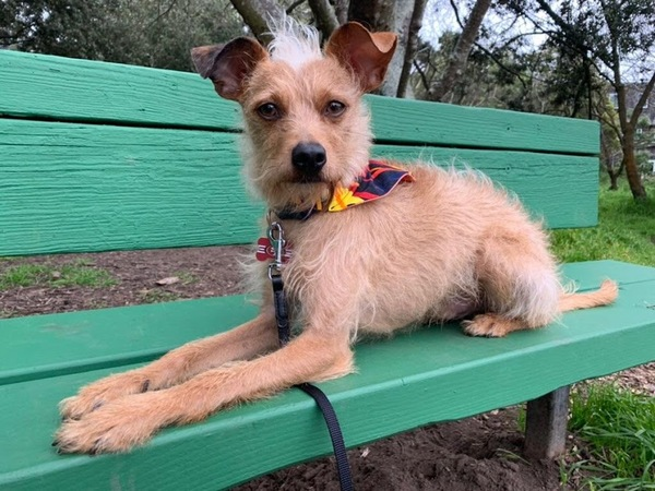 Stanley, who belongs to loyal reader Denise, enjoys the sturdiness of a robust park bench. Want your pet to appear in The Highlighter? hltr.co/pets