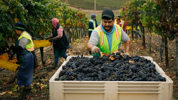How California wine sales are being hurt by trade war with China