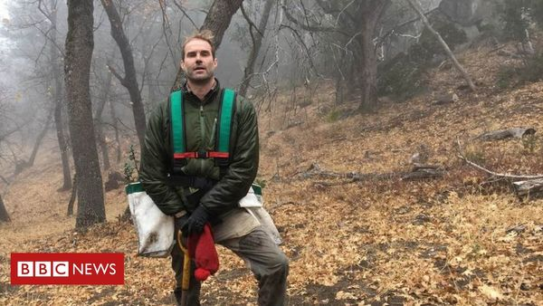 Climate change: One man's fight to save a California tree - BBC News
