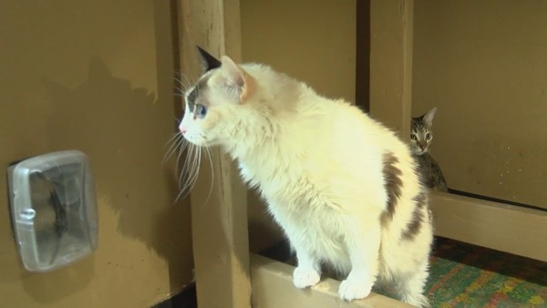 Concerned owner sends four cats from Venezuela to Cat House on the Kings