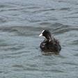 Waarschuwing voor blauwalg bij het Venegat ingetrokken