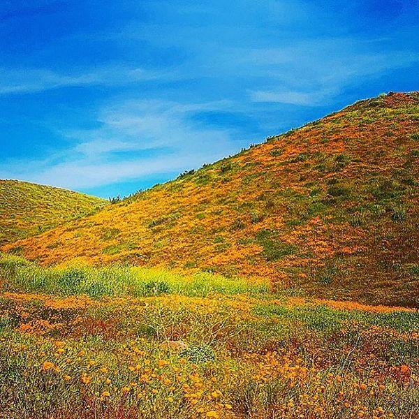 Des hordes d'Instagrammeurs ont littéralement dévasté un magnifique champ de coquelicots