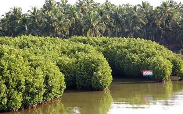 Maharashtra's success story with mangroves