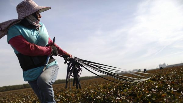 California's water crisis has put farmers in a race to the bottom | Grist