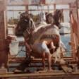 Filmklassieker Jaws: 40 jaar oude (zeldzame) set-foto's duiken op - WANT