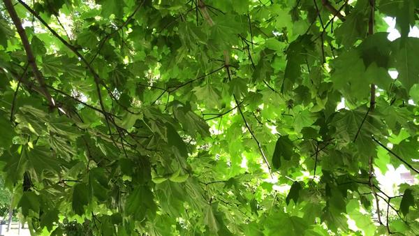 Листочки в парке